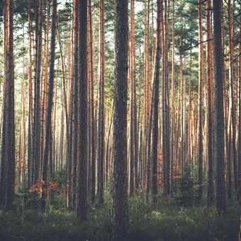 trees-1209088 (Copier)